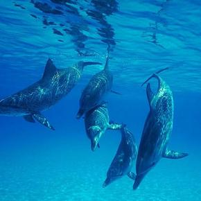 Cetacean scoop
