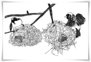 Southern masked weaver nests: adult and juvenile comparison