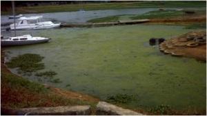 Cyanobacteria of Lake Chivero
