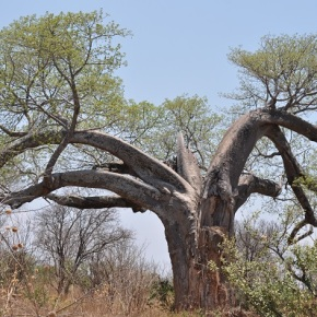 Zimbabwe: First impressions