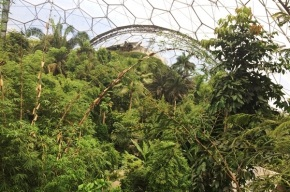 Reaching new heights: camping out in the Eden Project