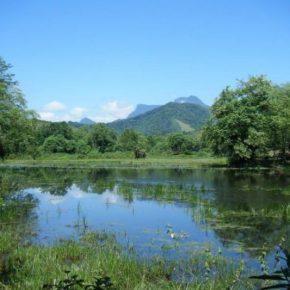 Five reasons the world needswetlands