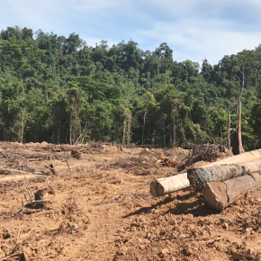 Deforestation at the border: the fight against palmoil