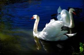 Are birds the most romanticanimals?